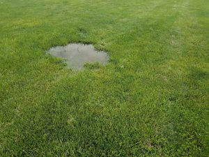 Water Puddle in Yard due to Improper Slope