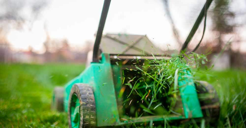 How Short to Cut Grass for Winter