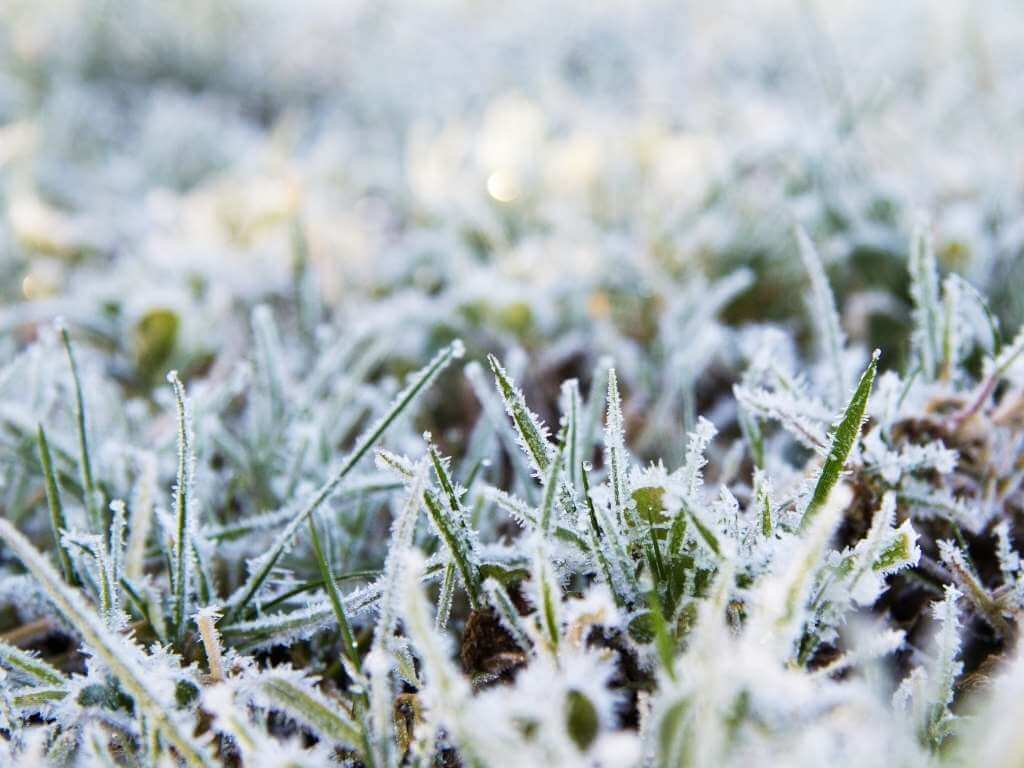 Don't Allow Anyone to Walk Over Your Frozen Grass