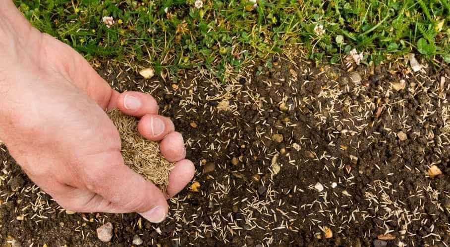 Scatter Grass Seeds on Soil