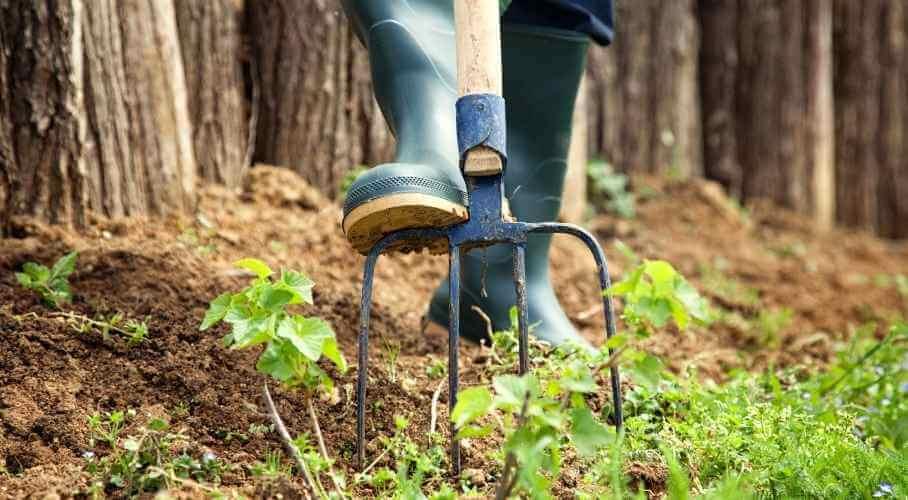Use Garden Fork to Loosen Soil